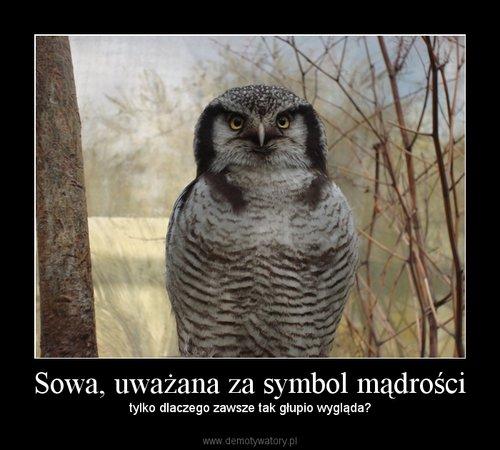 Sowa, uważana za symbol mądrości