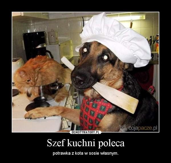 Szef kuchni poleca – potrawka z kota w sosie własnym.