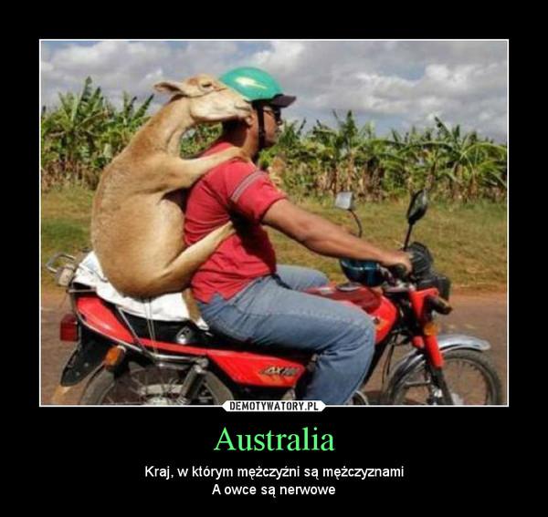 Australia – Kraj, w którym mężczyźni są mężczyznamiA owce są nerwowe