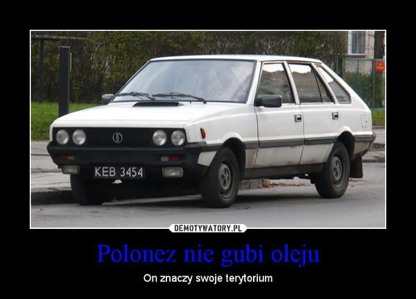 Polonez nie gubi oleju – On znaczy swoje terytorium