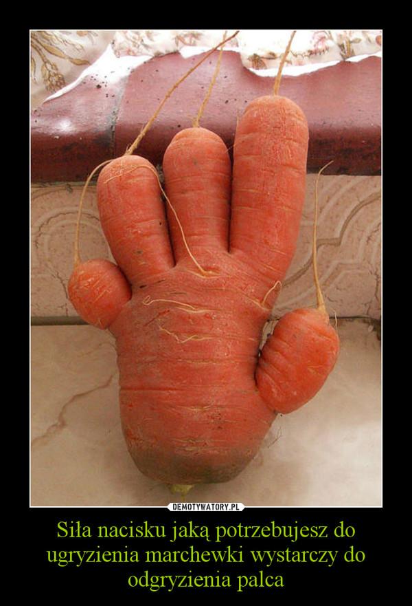 Siła nacisku jaką potrzebujesz do ugryzienia marchewki wystarczy do odgryzienia palca –