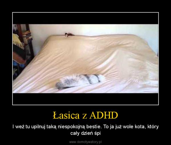 Łasica z ADHD – I weź tu upilnuj taką niespokojną bestie. To ja już wole kota, który cały dzień śpi