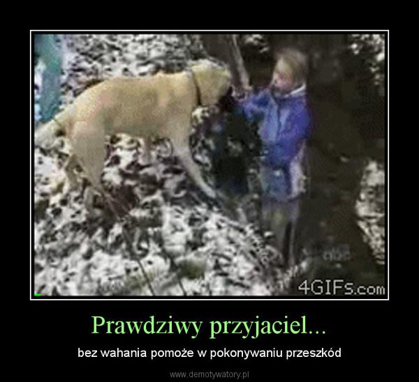 Prawdziwy przyjaciel... – bez wahania pomoże w pokonywaniu przeszkód
