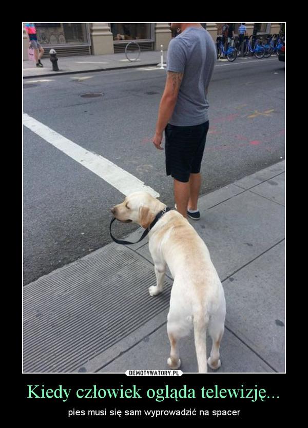 Kiedy człowiek ogląda telewizję... – pies musi się sam wyprowadzić na spacer