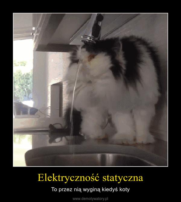 Elektryczność statyczna – To przez nią wyginą kiedyś koty