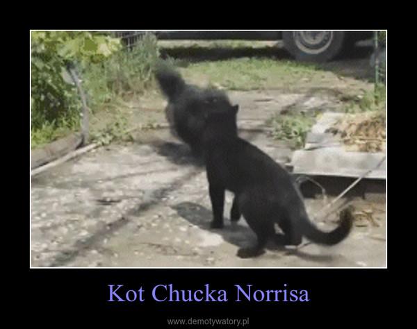Kot Chucka Norrisa –