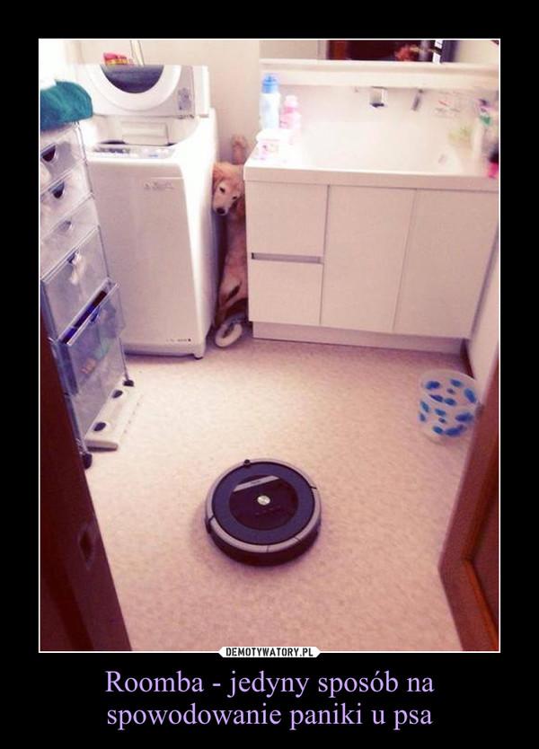 Roomba - jedyny sposób na spowodowanie paniki u psa –