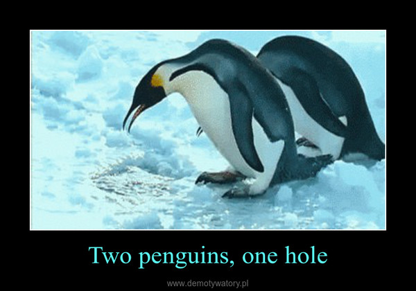 Two penguins, one hole –