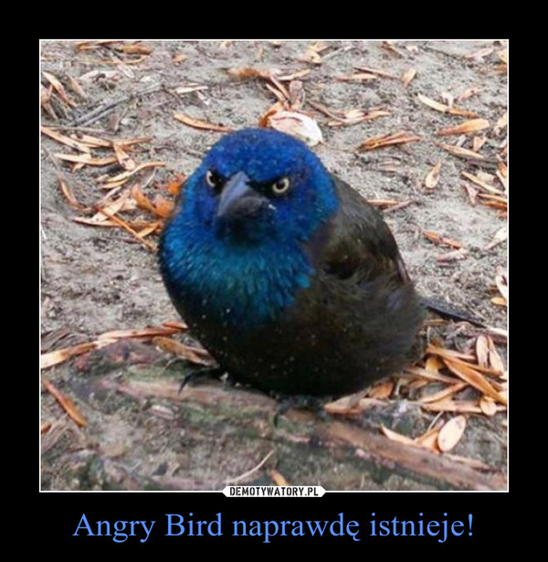 Angry Bird naprawdę istnieje! –