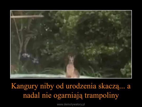 Kangury niby od urodzenia skaczą... a nadal nie ogarniają trampoliny –