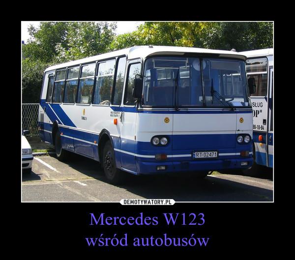 Mercedes W123wśród autobusów –