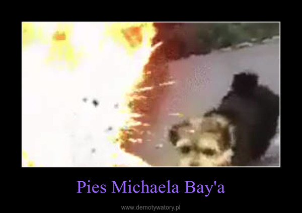 Pies Michaela Bay'a –