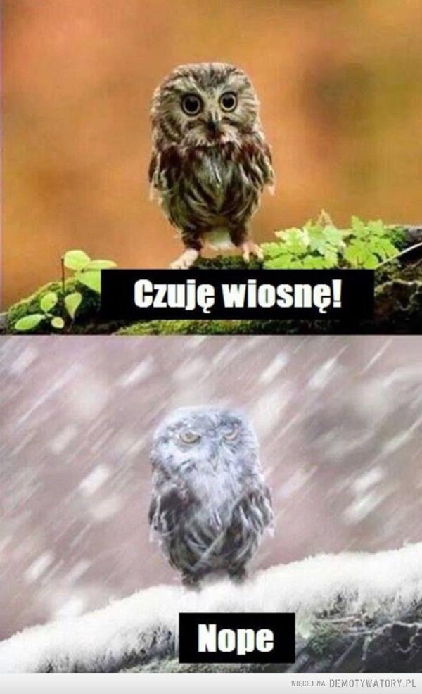 W lany poniedziałek znowu będzie bitwa na śnieżki... –