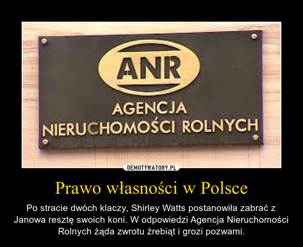 Prawo własności w Polsce – Po stracie dwóch klaczy, Shirley Watts postanowiła zabrać z Janowa resztę swoich koni. W odpowiedzi Agencja Nieruchomości Rolnych żąda zwrotu źrebiąt i grozi pozwami.