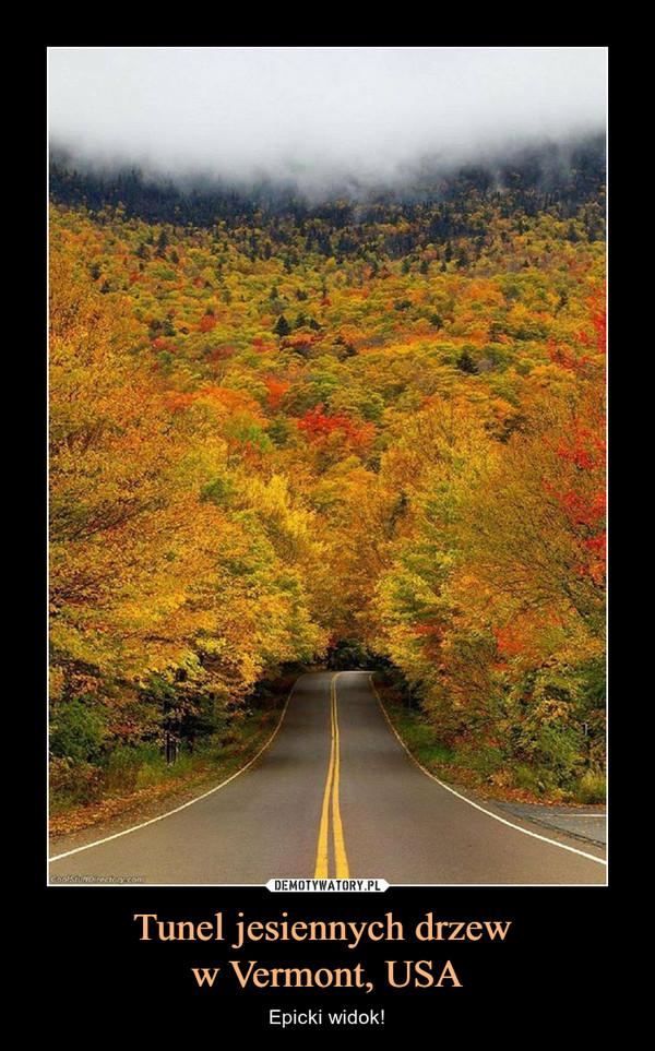Tunel jesiennych drzew w Vermont, USA – Epicki widok!