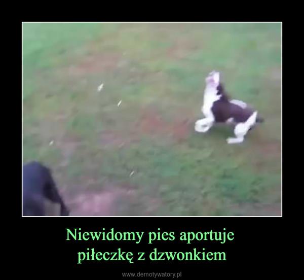 Niewidomy pies aportuje piłeczkę z dzwonkiem –