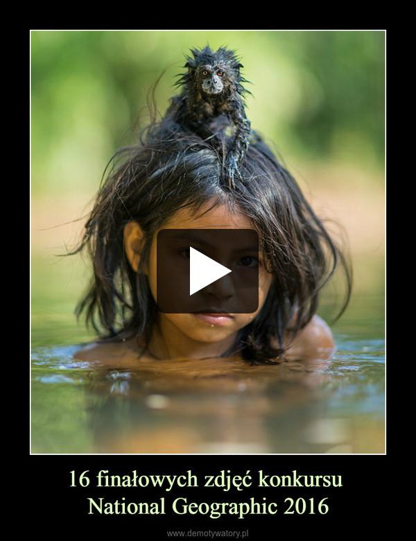 16 finałowych zdjęć konkursu National Geographic 2016 –
