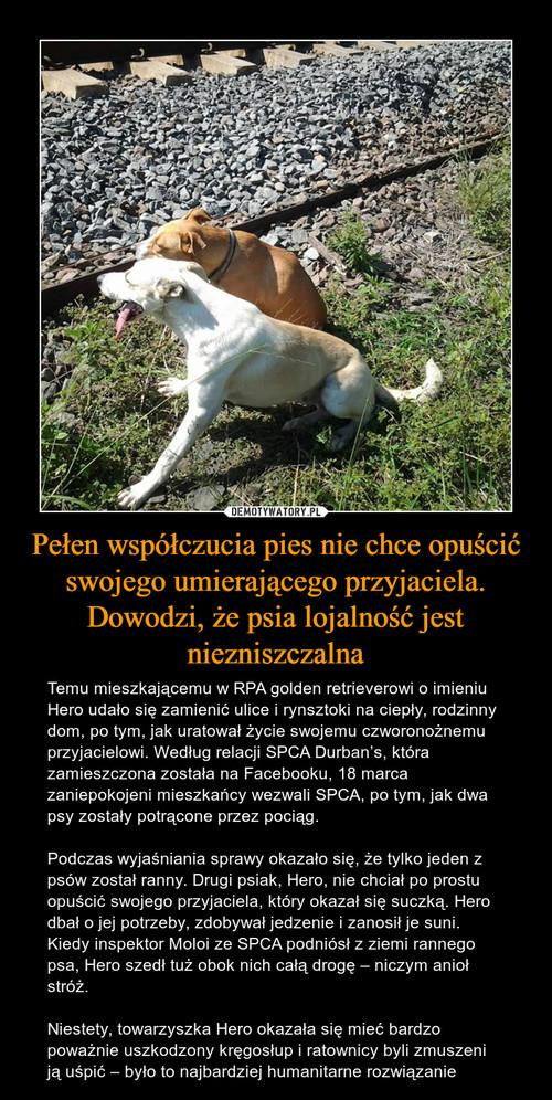 Pełen współczucia pies nie chce opuścić swojego umierającego przyjaciela. Dowodzi, że psia lojalność jest niezniszczalna