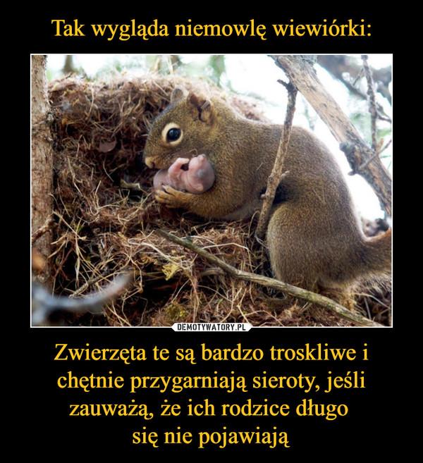 Zwierzęta te są bardzo troskliwe i chętnie przygarniają sieroty, jeśli zauważą, że ich rodzice długo się nie pojawiają –