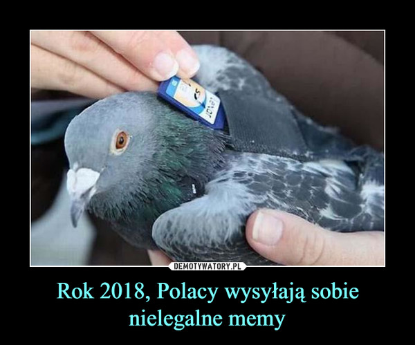 Rok 2018, Polacy wysyłają sobie nielegalne memy –