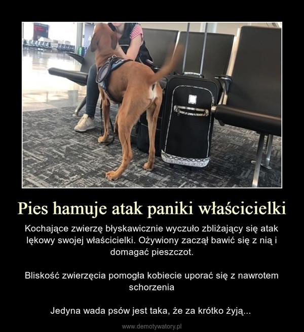 Pies hamuje atak paniki właścicielki – Kochające zwierzę błyskawicznie wyczuło zbliżający się atak lękowy swojej właścicielki. Ożywiony zaczął bawić się z nią i domagać pieszczot.Bliskość zwierzęcia pomogła kobiecie uporać się z nawrotem schorzeniaJedyna wada psów jest taka, że za krótko żyją...