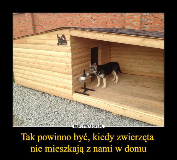 Tak powinno być, kiedy zwierzęta nie mieszkają z nami w domu –