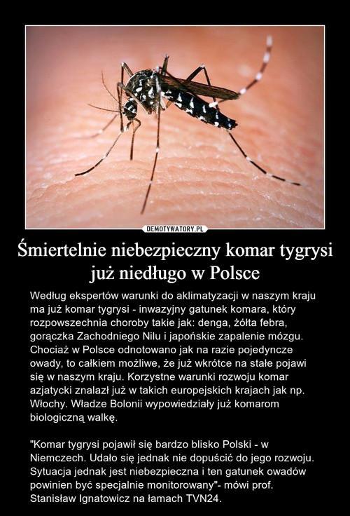 Śmiertelnie niebezpieczny komar tygrysi już niedługo w Polsce
