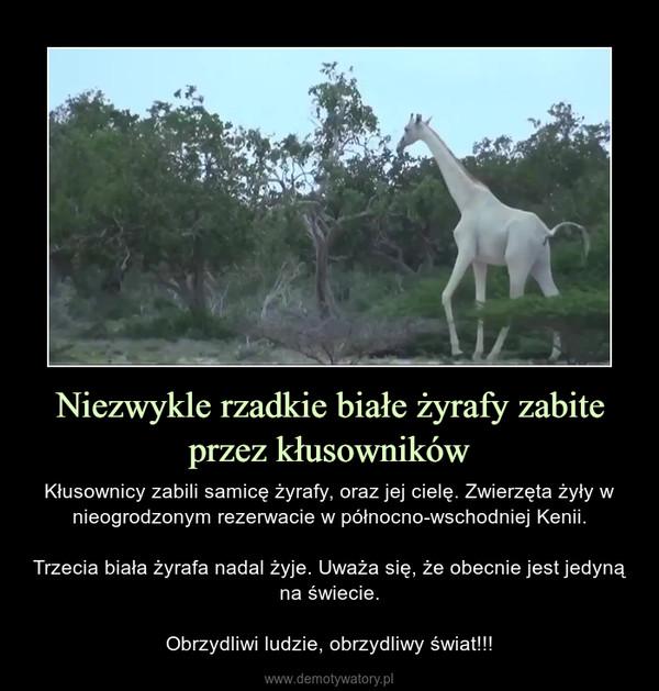 Niezwykle rzadkie białe żyrafy zabite przez kłusowników – Kłusownicy zabili samicę żyrafy, oraz jej cielę. Zwierzęta żyły w nieogrodzonym rezerwacie w północno-wschodniej Kenii.Trzecia biała żyrafa nadal żyje. Uważa się, że obecnie jest jedyną na świecie.Obrzydliwi ludzie, obrzydliwy świat!!!