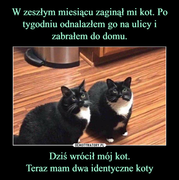 Dziś wrócił mój kot.Teraz mam dwa identyczne koty –