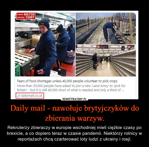 Daily mail - nawołuje brytyjczyków do zbierania warzyw. – Rekruterzy zbieraczy w europie wschodniej mieli ciężkie czasy po brexicie, a co dopiero teraz w czasie pandemii. Niektórzy rolnicy w reportażach chcą czarterować loty ludzi z ukrainy i rosji.