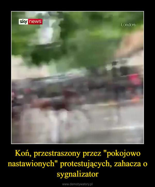 """Koń, przestraszony przez """"pokojowo nastawionych"""" protestujących, zahacza o sygnalizator –"""