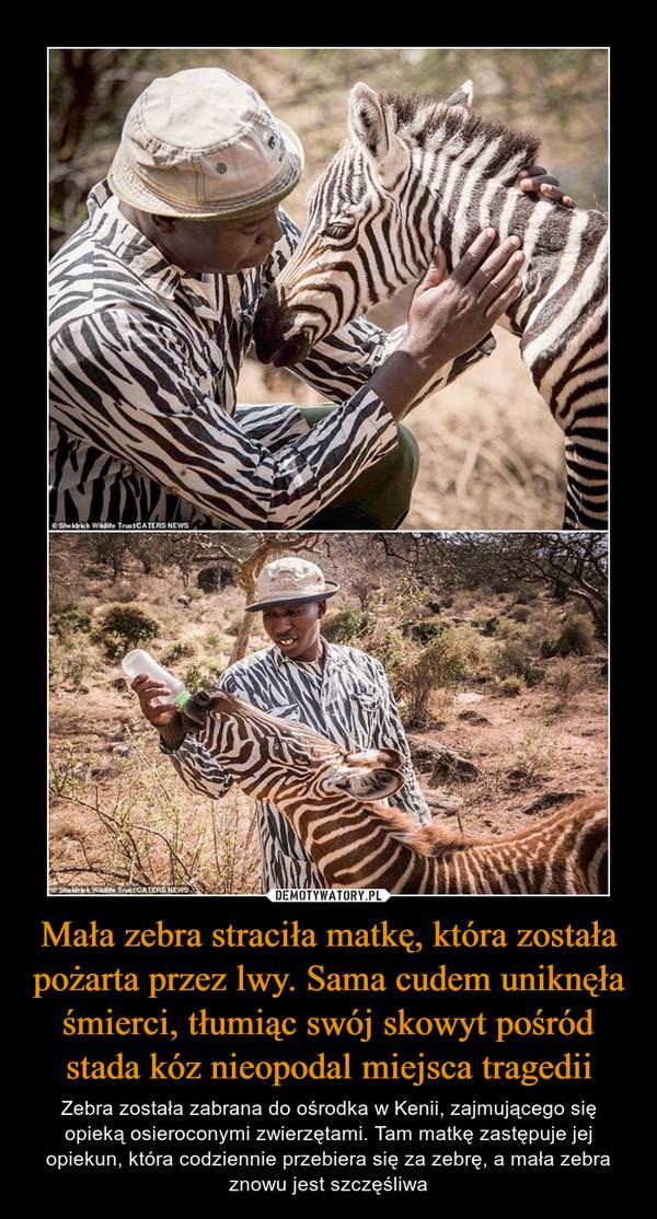 Mała zebra straciła matkę, która została pożarta przez lwy. Sama cudem uniknęła śmierci, tłumiąc swój skowyt pośród stada kóz nieopodal miejsca tragedii – Zebra została zabrana do ośrodka w Kenii, zajmującego się opieką osieroconymi zwierzętami. Tam matkę zastępuje jej opiekun, która codziennie przebiera się za zebrę, a mała zebra znowu jest szczęśliwa