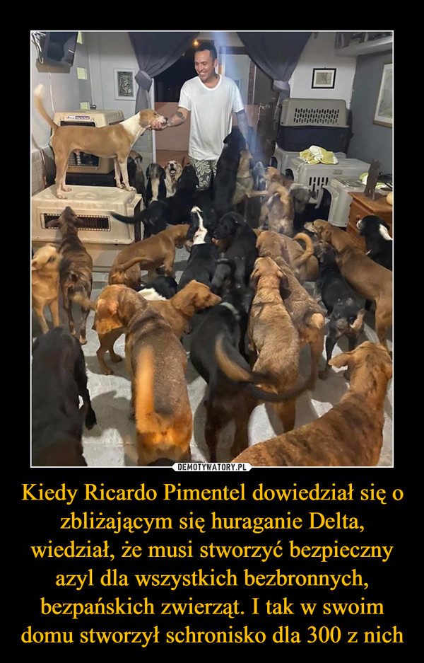 Kiedy Ricardo Pimentel dowiedział się o zbliżającym się huraganie Delta, wiedział, że musi stworzyć bezpieczny azyl dla wszystkich bezbronnych, bezpańskich zwierząt. I tak w swoim domu stworzył schronisko dla 300 z nich –