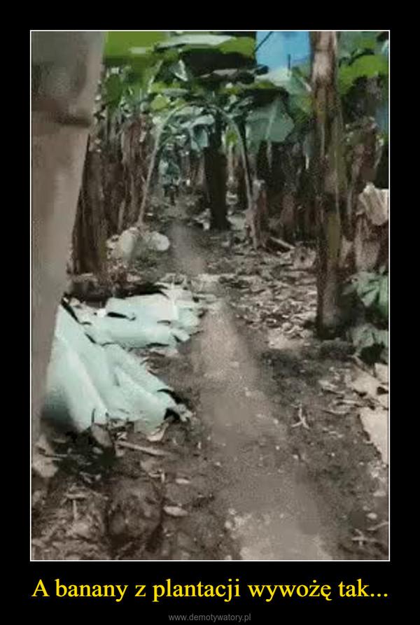 A banany z plantacji wywożę tak... –