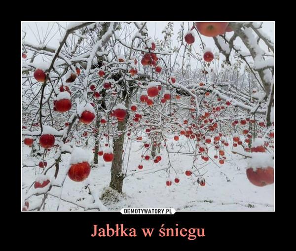 Jabłka w śniegu –