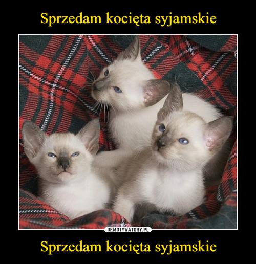 Sprzedam kocięta syjamskie Sprzedam kocięta syjamskie