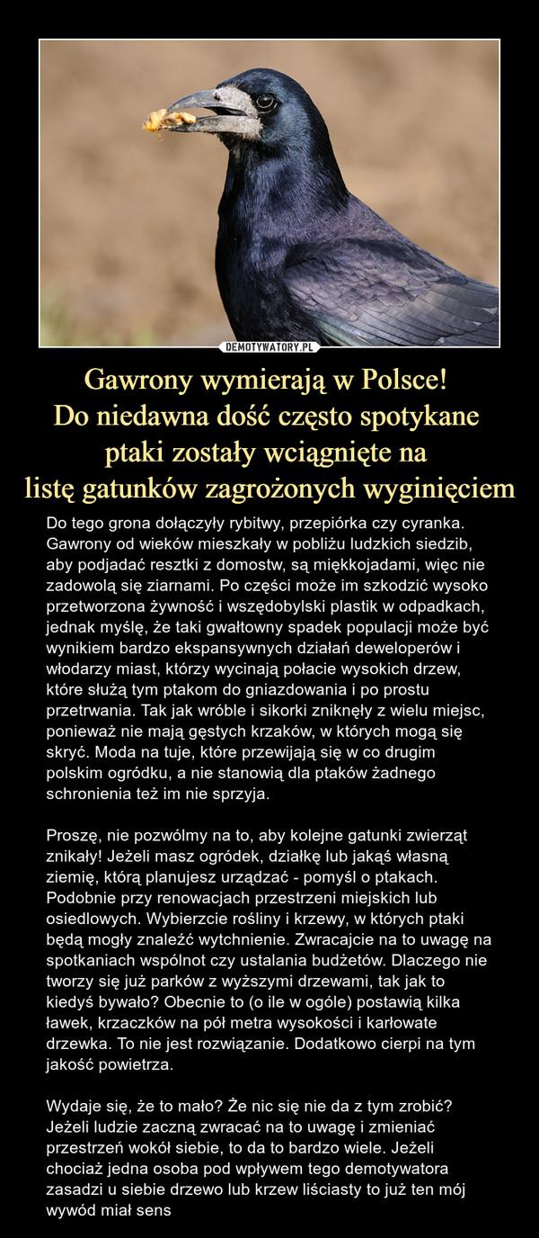 Gawrony wymierają w Polsce! Do niedawna dość często spotykane ptaki zostały wciągnięte na listę gatunków zagrożonych wyginięciem – Do tego grona dołączyły rybitwy, przepiórka czy cyranka. Gawrony od wieków mieszkały w pobliżu ludzkich siedzib, aby podjadać resztki z domostw, są miękkojadami, więc nie zadowolą się ziarnami. Po części może im szkodzić wysoko przetworzona żywność i wszędobylski plastik w odpadkach, jednak myślę, że taki gwałtowny spadek populacji może być wynikiem bardzo ekspansywnych działań deweloperów i włodarzy miast, którzy wycinają połacie wysokich drzew, które służą tym ptakom do gniazdowania i po prostu przetrwania. Tak jak wróble i sikorki zniknęły z wielu miejsc, ponieważ nie mają gęstych krzaków, w których mogą się skryć. Moda na tuje, które przewijają się w co drugim polskim ogródku, a nie stanowią dla ptaków żadnego schronienia też im nie sprzyja.Proszę, nie pozwólmy na to, aby kolejne gatunki zwierząt znikały! Jeżeli masz ogródek, działkę lub jakąś własną ziemię, którą planujesz urządzać - pomyśl o ptakach. Podobnie przy renowacjach przestrzeni miejskich lub osiedlowych. Wybierzcie rośliny i krzewy, w których ptaki będą mogły znaleźć wytchnienie. Zwracajcie na to uwagę na spotkaniach wspólnot czy ustalania budżetów. Dlaczego nie tworzy się już parków z wyższymi drzewami, tak jak to kiedyś bywało? Obecnie to (o ile w ogóle) postawią kilka ławek, krzaczków na pół metra wysokości i karłowate drzewka. To nie jest rozwiązanie. Dodatkowo cierpi na tym jakość powietrza.Wydaje się, że to mało? Że nic się nie da z tym zrobić? Jeżeli ludzie zaczną zwracać na to uwagę i zmieniać przestrzeń wokół siebie, to da to bardzo wiele. Jeżeli chociaż jedna osoba pod wpływem tego demotywatora zasadzi u siebie drzewo lub krzew liściasty to już ten mój wywód miał sens