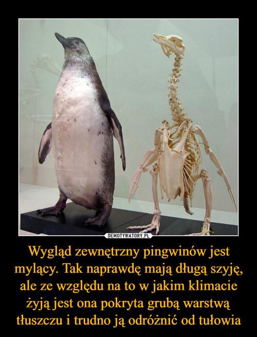 Wygląd zewnętrzny pingwinów jest mylący. Tak naprawdę mają długą szyję, ale ze względu na to w jakim klimacie żyją jest ona pokryta grubą warstwą tłuszczu i trudno ją odróżnić od tułowia