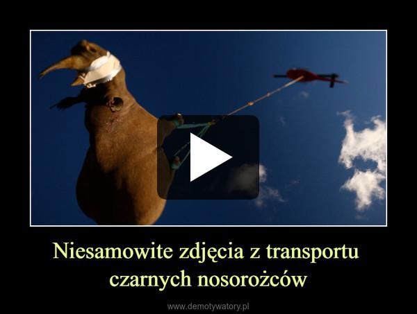 Niesamowite zdjęcia z transportu czarnych nosorożców –