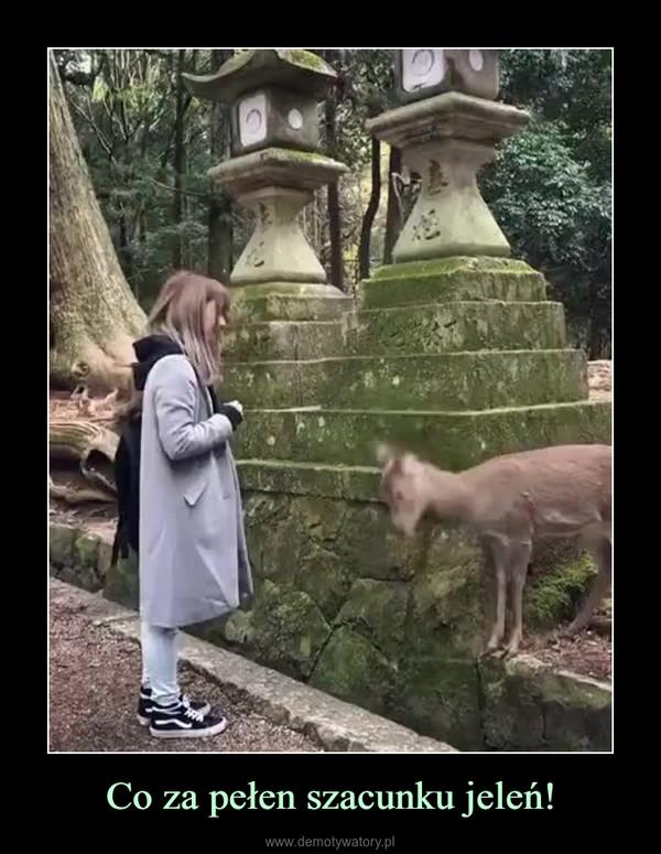Co za pełen szacunku jeleń! –
