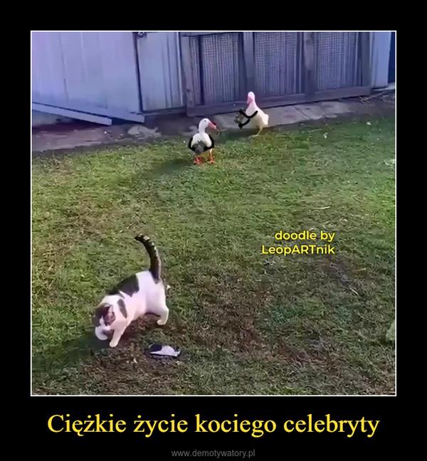 Ciężkie życie kociego celebryty –