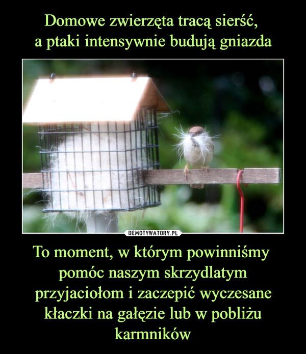 To moment, w którym powinniśmy pomóc naszym skrzydlatym przyjaciołom i zaczepić wyczesane kłaczki na gałęzie lub w pobliżu karmników –