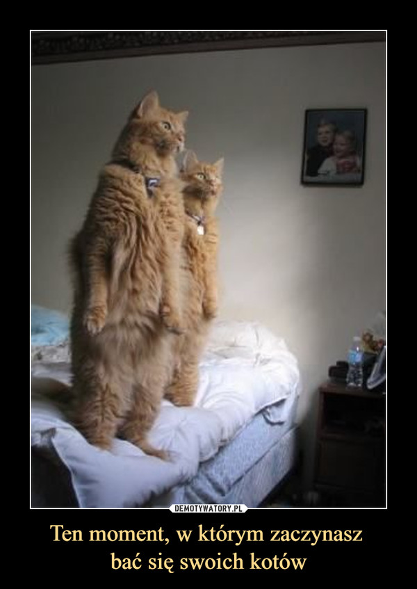 Ten moment, w którym zaczynasz bać się swoich kotów –