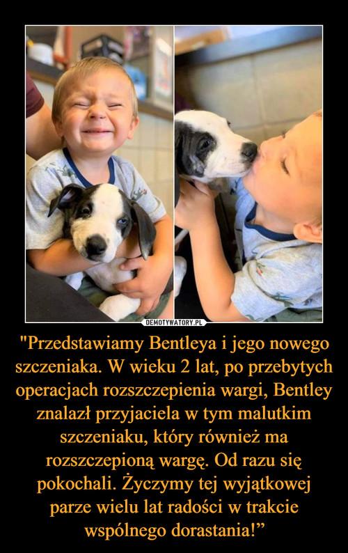 """""""Przedstawiamy Bentleya i jego nowego szczeniaka. W wieku 2 lat, po przebytych operacjach rozszczepienia wargi, Bentley znalazł przyjaciela w tym malutkim szczeniaku, który również ma rozszczepioną wargę. Od razu się pokochali. Życzymy tej wyjątkowej parze wielu lat radości w trakcie wspólnego dorastania!"""""""