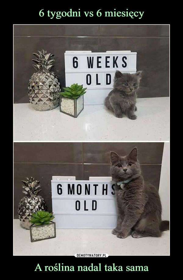 A roślina nadal taka sama –
