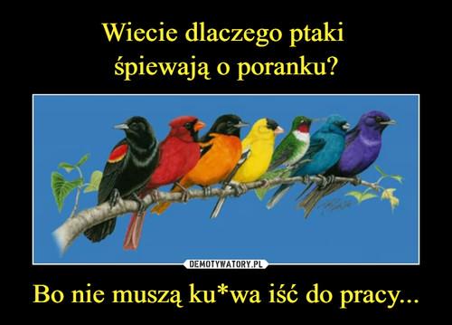 Wiecie dlaczego ptaki  śpiewają o poranku? Bo nie muszą ku*wa iść do pracy...