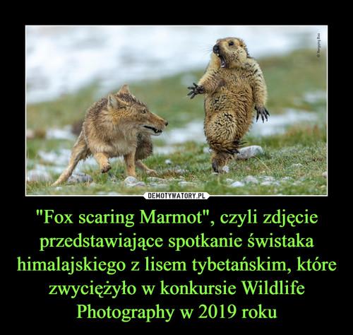 """""""Fox scaring Marmot"""", czyli zdjęcie przedstawiające spotkanie świstaka himalajskiego z lisem tybetańskim, które zwyciężyło w konkursie Wildlife Photography w 2019 roku"""