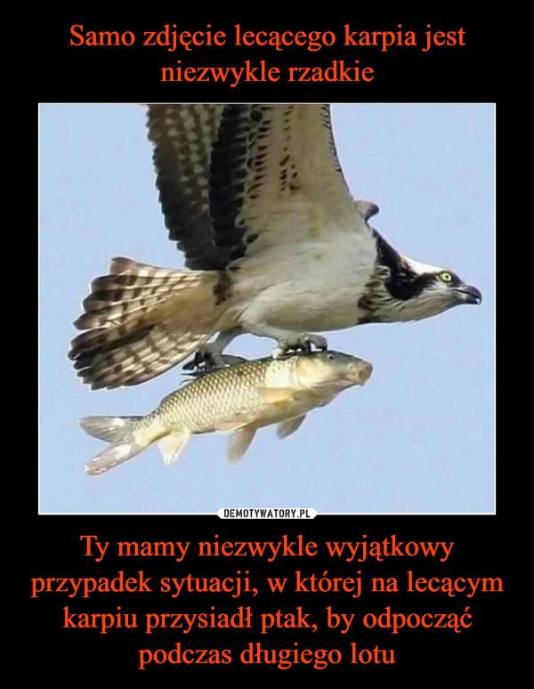 Ty mamy niezwykle wyjątkowy przypadek sytuacji, w której na lecącym karpiu przysiadł ptak, by odpocząć podczas długiego lotu –