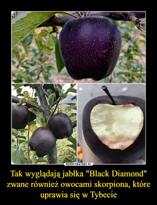 """Tak wyglądają jabłka """"Black Diamond"""" zwane również owocami skorpiona, które uprawia się w Tybecie"""