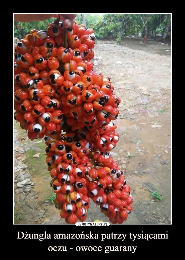 Dżungla amazońska patrzy tysiącami oczu - owoce guarany –
